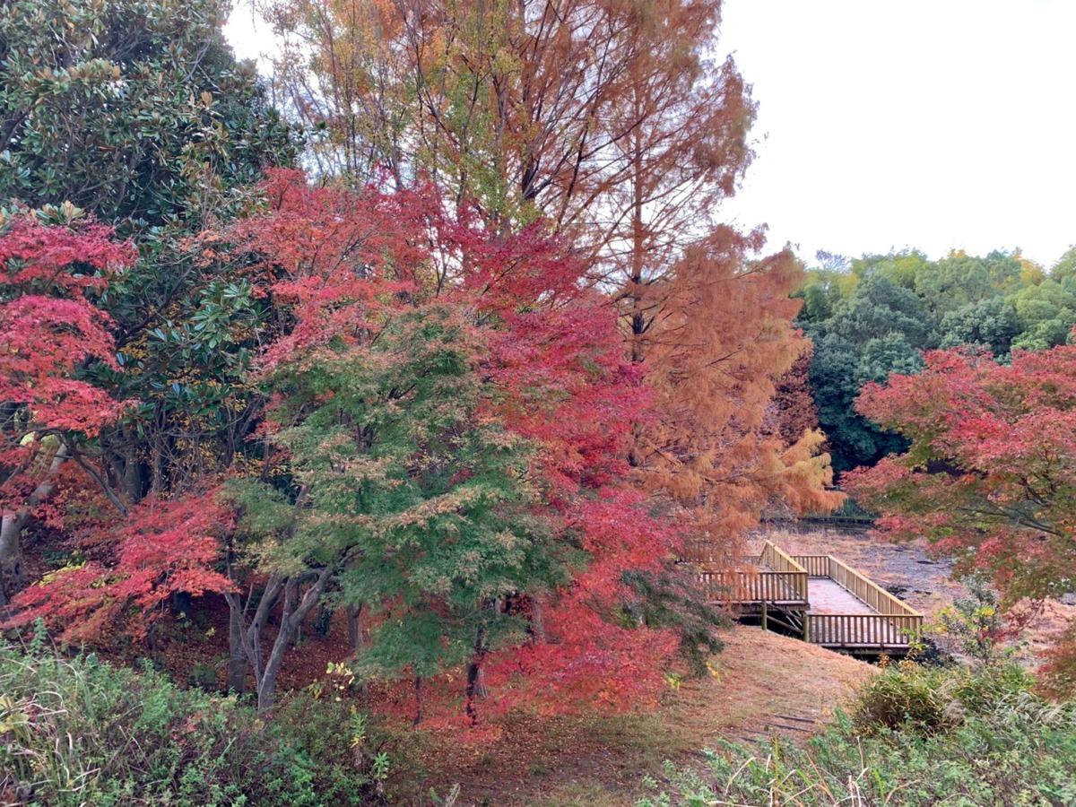 ★蜻蛉池公園★メタセコイアやカエデなど・・・芝生とのコントラストも美しい今が見頃の紅葉スポット♪【紅葉フォト】: