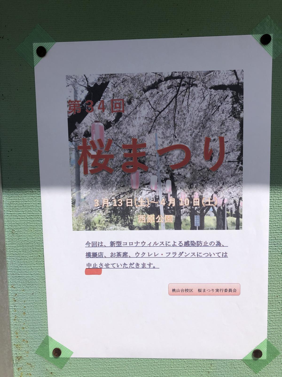 【2021.4/10(土)まで開催中!】堺市南区・西原公園で『第34回 桜まつり』が開催してるよ~!: