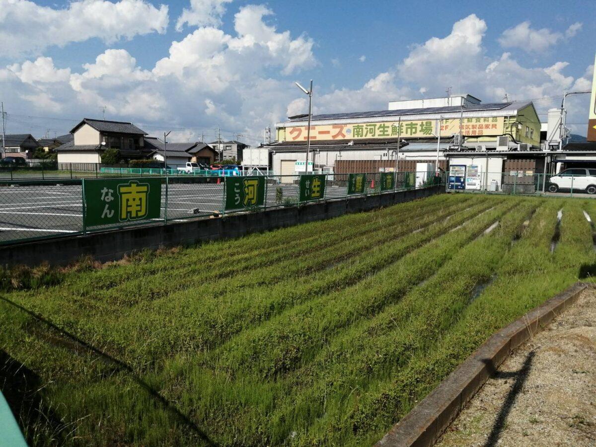 【リニューアル情報】羽曳野市・激安スーパー『クニーズ・南河生鮮市場羽曳野店』のお店入口横にお花屋さんがオープンするみたいです♪: