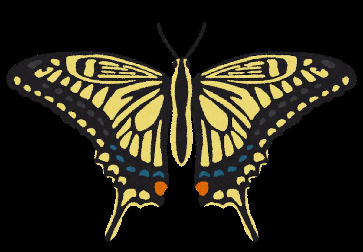 【2021.8/7(土)開催】堺区・堺市都市緑化センター★夏休みにじっくり取り組みたい講習会『昆虫の標本作り』開催♪受付は7/7(水)から!!: